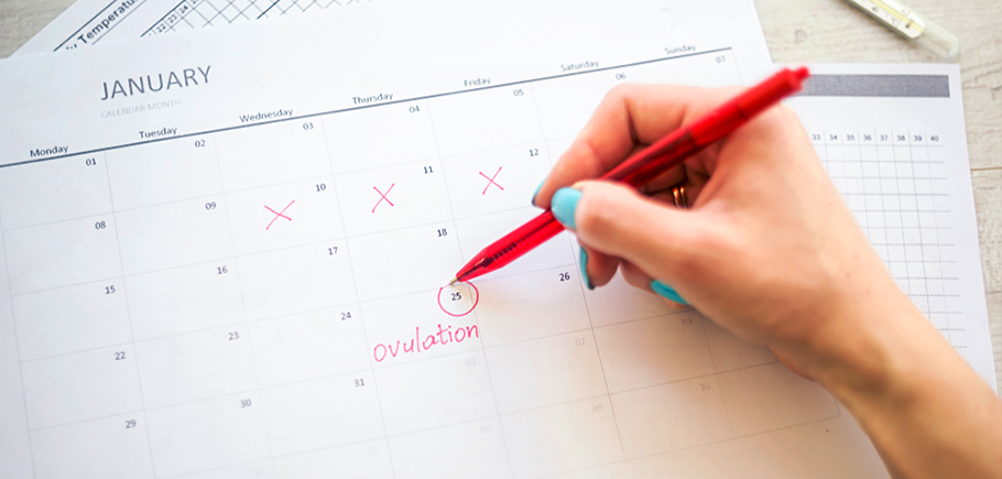 How To Track Ovulation