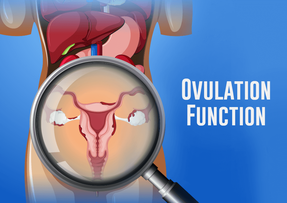Ovulation Function