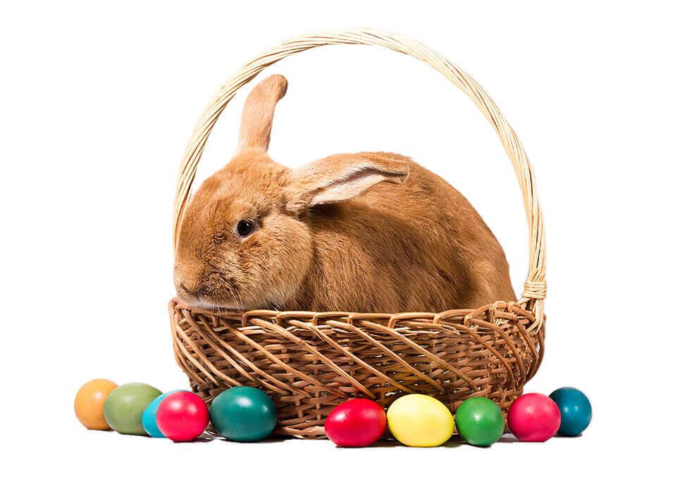 Recruit the Bunny