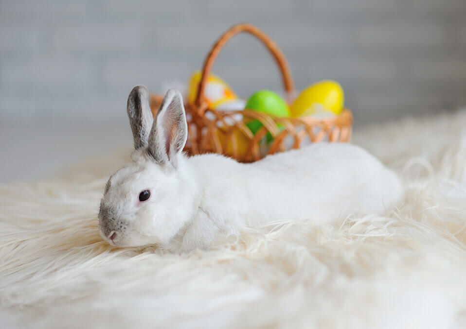 Some Bunny Has Got News