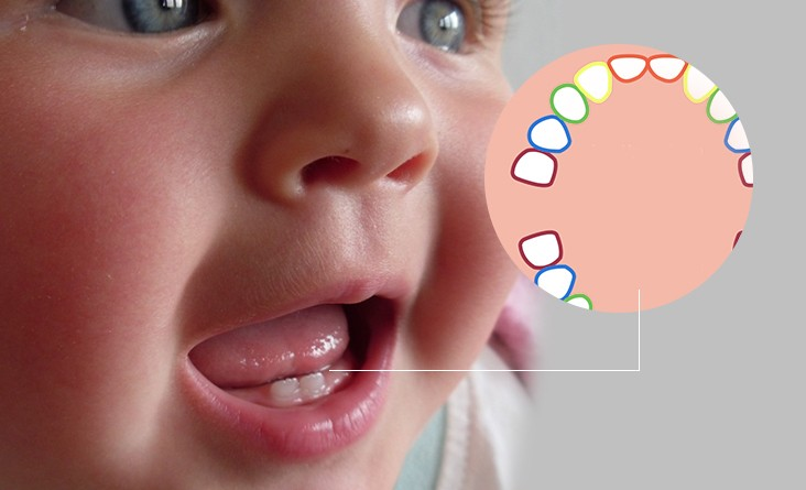 When Does Teething Start In Babies?