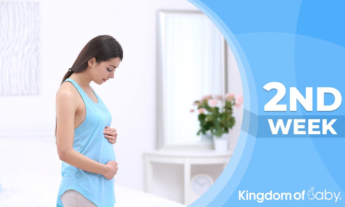 pregnancyweek