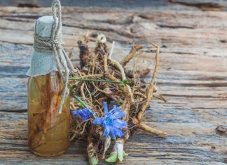 Chicory Root: Is It Safe During Pregnancy?