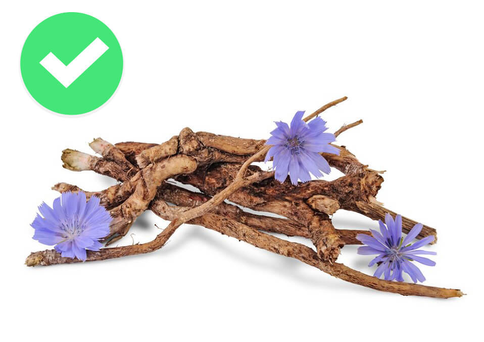 Contents of the chicory root