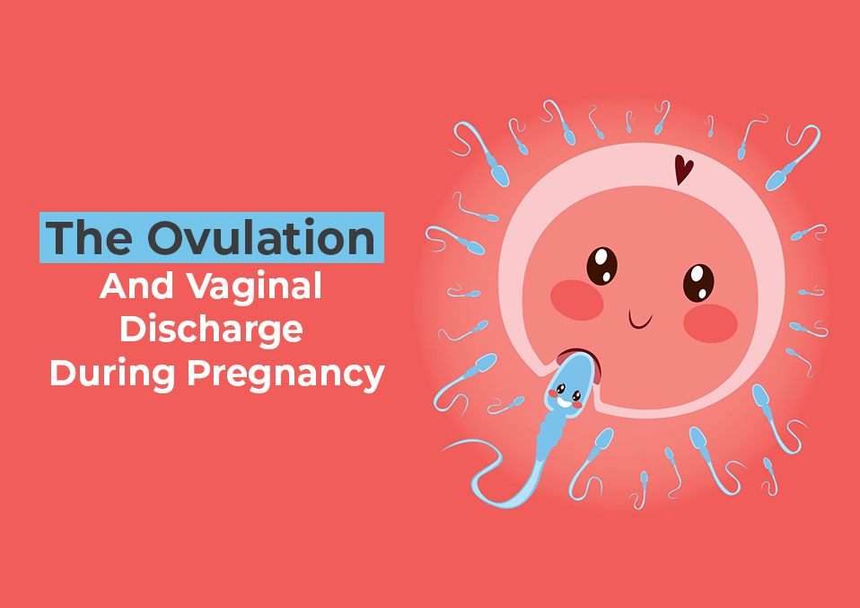 The Ovulation And Vaginal Discharge During Pregnancy