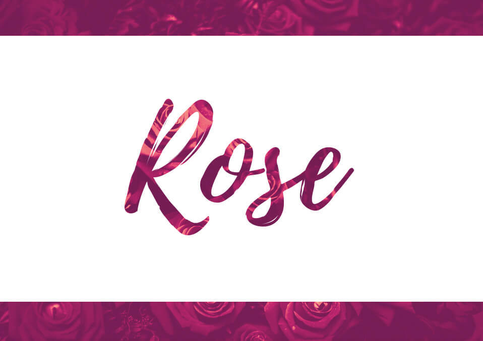 Rose Meaning of Name, Origins, and Personality