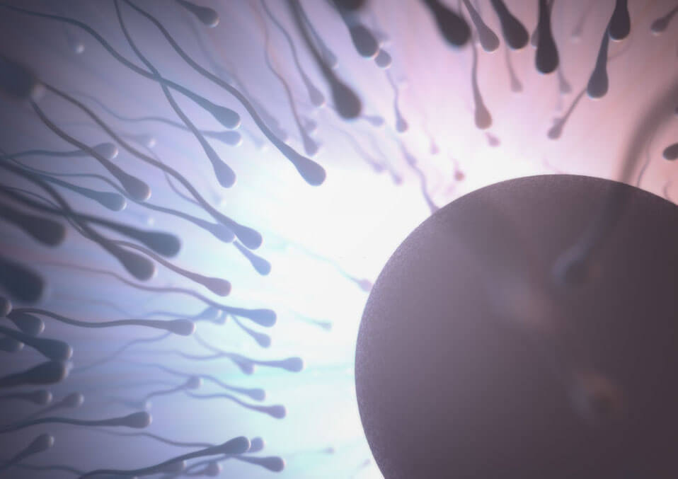 Sperm Survival :How Long Does It Take Sperm to Reach the Cervix?